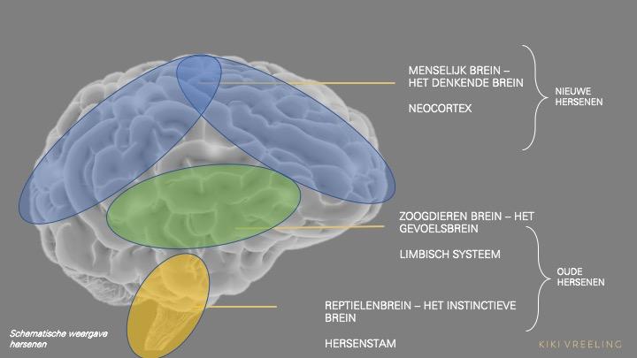 Het brein mindful leiderschap